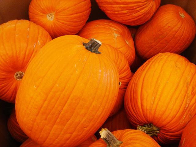pumpkin-1563650-640x480